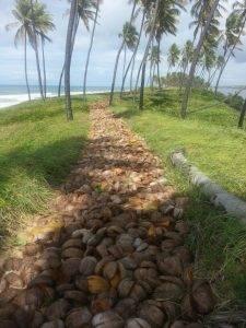 Trecho da pista com cascas de coco
